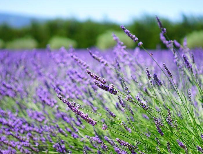Visitez la Provence verte au départ d'Aix-en-Provence !